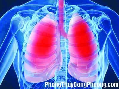 viem phoi khong do nhiem trung Giải mã các bí ẩn giấc mơ thấy mình đang bơi với bệnh đau phổi