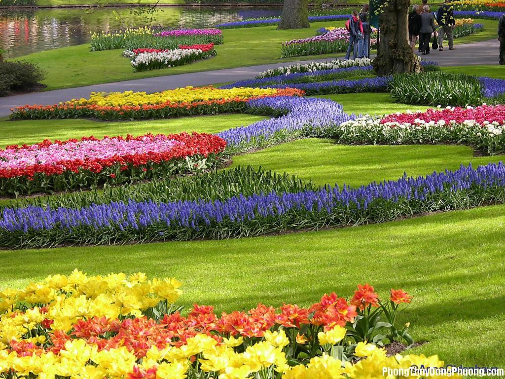 vuon hoa Giải mã các bí ẩn giấc mơ thấy vườn hoa bãi cỏ