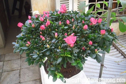 hoa do quyen Những loại cây phù hợp để trồng ở ban công