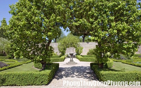 phong thuy 21 Trồng cây xanh hài hòa cho khu vườn