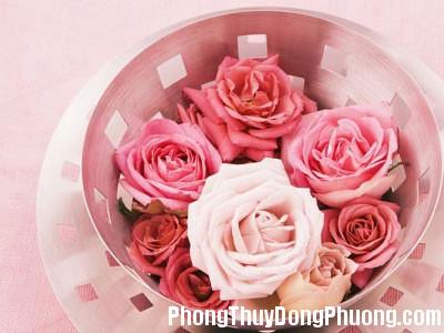 hoa Hoa nào không nên đặt trong phòng ngủ ?