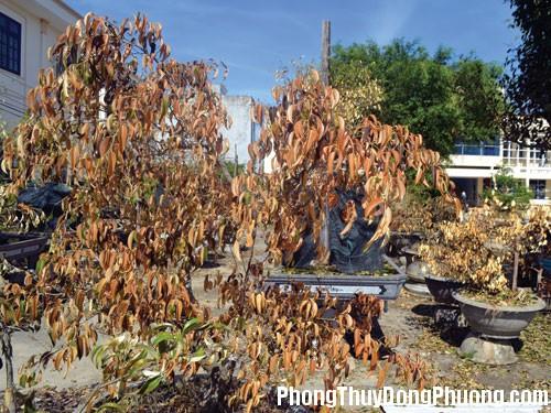 091317baoxaydung image001 Trước nhà không nên có cây khô