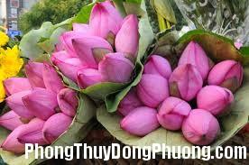 images 4 Những loài hoa thu hút may mắn cho ngôi nhà