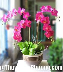 images 5 Những loài hoa thu hút may mắn cho ngôi nhà
