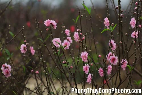 20140217105724846 Những loại hoa mang lại vượng khí cho nhà ở