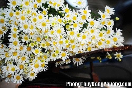 20140217105725158 Những loại hoa mang lại vượng khí cho nhà ở