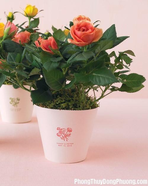20151214080445375 Chọn hoa, cây cảnh phù hợp cho phòng khách