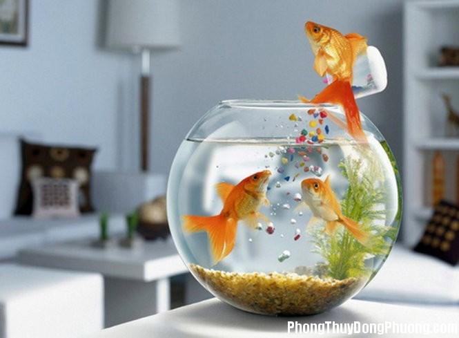 be ca canh phong thuy 1451883403 Những lưu ý phong thủy khi bố trí bể cá trong phòng làm việc
