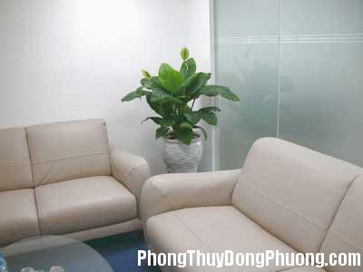 db759 Nên đặt cây gì trong phòng khách ?