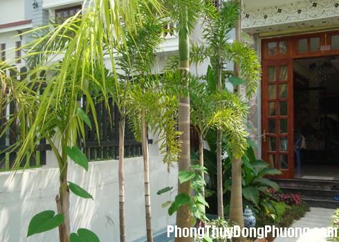hinh the cay coi Ảnh hưởng của hình thể cây cối đến nhà ở