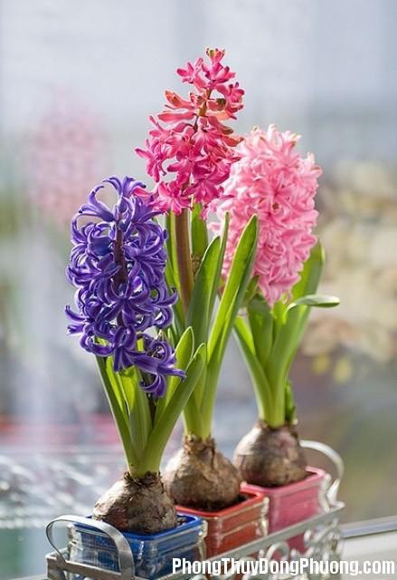 32 a4b8 Những loại hoa không nên đặt ở những vị trí nhất định trong nhà