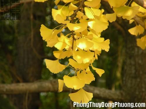 245 cauan1 Những loại cây đem lại bình an, xua tan vận rủi cho nhà ở