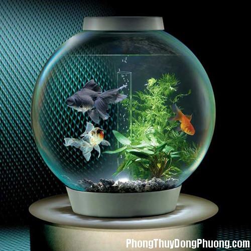 be ca hop phong thuy don tai loc vao nha2 Phong thủy bể cá tăng cường sự giàu có