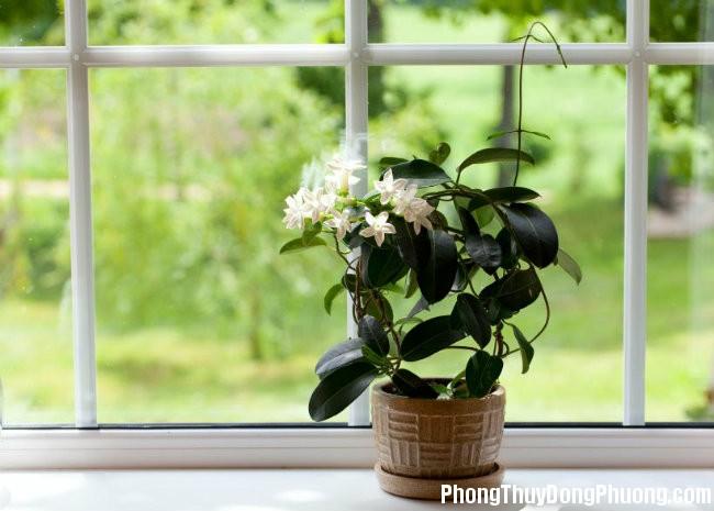 1 Những loại cây tốt nên đặt trong phòng ngủ