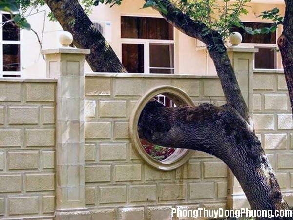 6 cam ky phong thuy nha o la diem dai hung cho gia chu 1 Những cấm kỵ phong thủy cần tránh đối với cây cối trong nhà