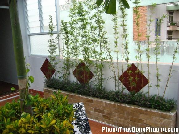 1468641534 155520baoxaydung 2 1462216023 Bí quyết trồng cây trước nhà để thu hút vượng khí
