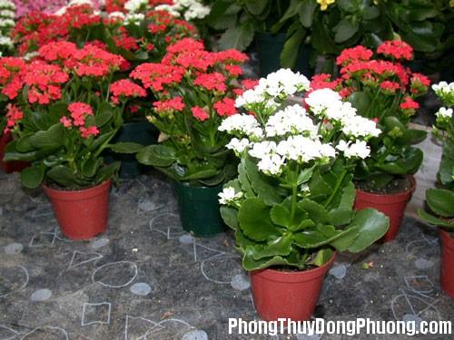 CEF bi quyet chon vat dung san vuon 2 Cách bố trí những vật dụng sân vườn hợp phong thủy