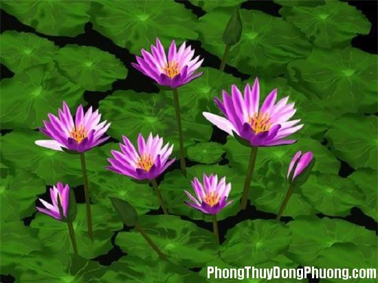 1471836959 cay hoa sung 4 Những vị trí cần lưu ý khi xây ao hồ trong nhà