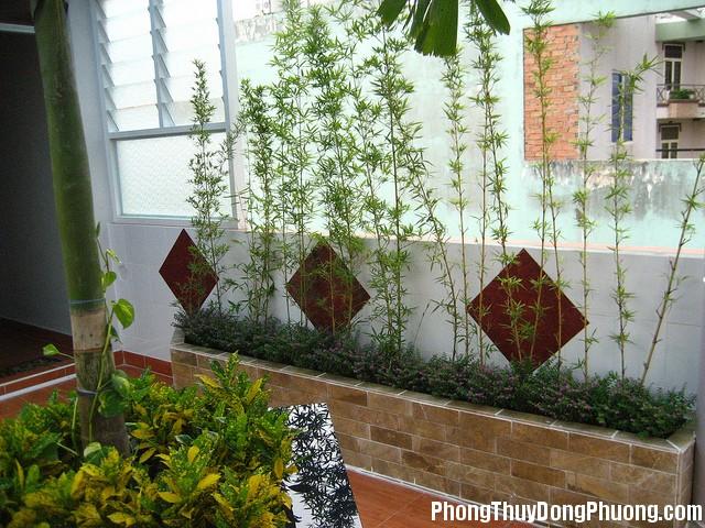 155520baoxaydung 2 1462216023 Nên và không nên khi trồng cây trước nhà