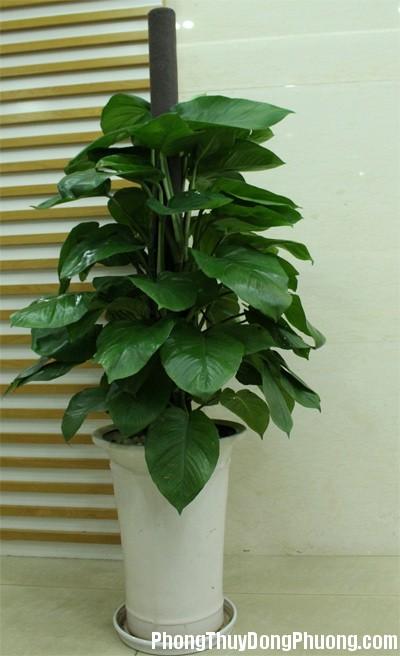 100528baoxaydung 9 Bí quyết trồng hoa trong nhà hợp phong thủy