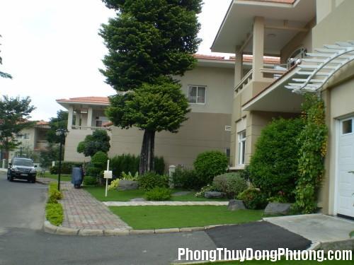 1 151536baoxaydung image001 1427192040339 Cây xanh có tác dụng hóa giải năng lượng xấu cho nhà ở