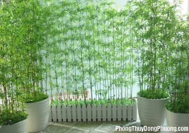 nhung cay canh phai trong trong nha de tien vao nhu nuoc Nên trồng những cây này trước nhà để được may mắn và tài lộc