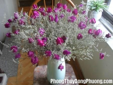 48 7ef8 Cách bài trí hoa khô trong nhà tránh được những đại kị