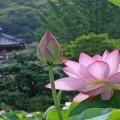 loai_hoa_nao_kieng_ky_chung_tren_ban_tho_trong_dip_tet