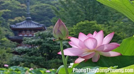 loai hoa nao kieng ky chung tren ban tho trong dip tet Không nên chọn những loại hoa này để cắm bàn thờ ngày Tết