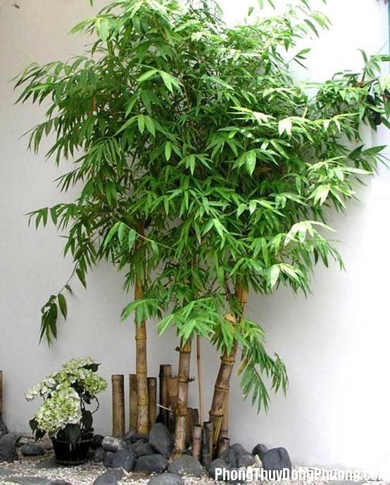 cay canh phong thuy phunutoday 0958 phunutoday Bí quyết trồng cây trước nhà đem lại tài lộc, sức khỏe