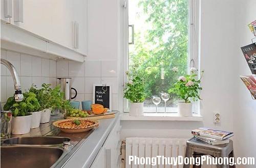 file.402927 Những lưu ý phong thủy cần biết khi đặt cây trong bếp
