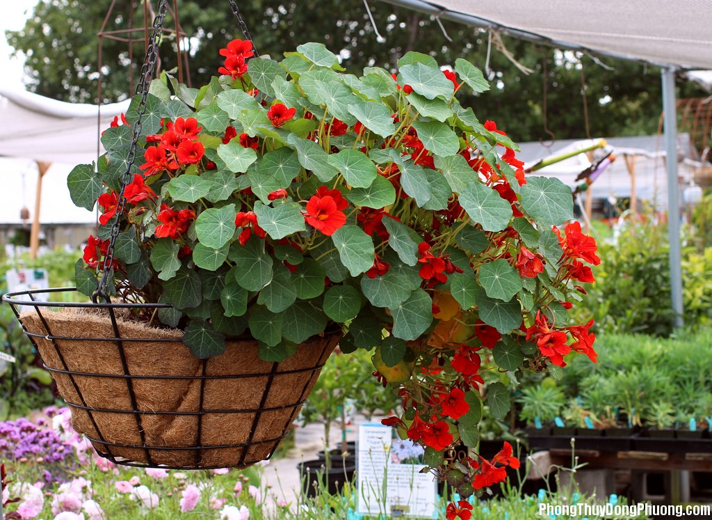 3197 Có 7 loại cây này trong nhà, vừa đẹp lại bảo đảm lũ muỗi không dám tới thăm nhà bạn