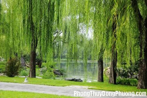 32 9272 5 loại cây sẽ mang nhiều xui xẻo tránh trồng trong vườn nhà