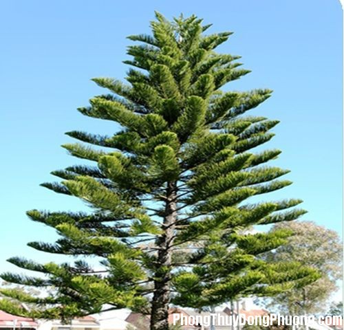 47 802b 5 loại cây sẽ mang nhiều xui xẻo tránh trồng trong vườn nhà