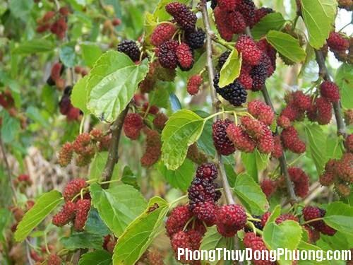 81 e136 5 loại cây sẽ mang nhiều xui xẻo tránh trồng trong vườn nhà