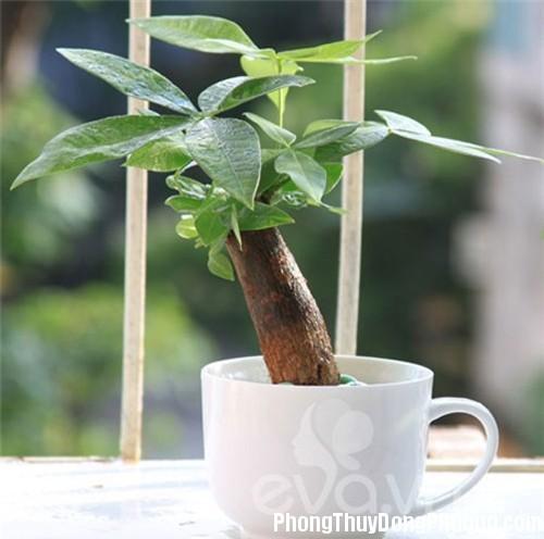 E0C datcaycanh 3 Để cây cảnh trên bàn làm việc, tài lộc và may mắn chảy vô ào ào