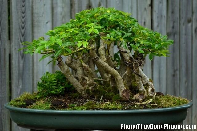 cay duoi muoi4 phunutoday 0932 phunutoday Có 7 loại cây này trong nhà, vừa đẹp lại bảo đảm lũ muỗi không dám tới thăm nhà bạn