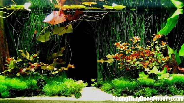 vi sao trong nha nen co cay xanh va nuoc 2 Tại vì sao trong nhà nên có cây xanh và nước?