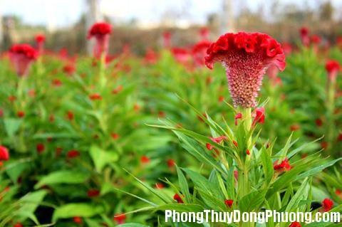 150613 nhung loai hoa y nghia trong phong thuy 2 3 loại hoa đặt trong văn phòng vừa đẹp lại  rất ý nghĩa