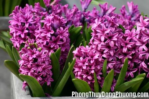 151206 hoa da lan huong Những loại hoa có tác dụng khai vận cho phòng làm việc
