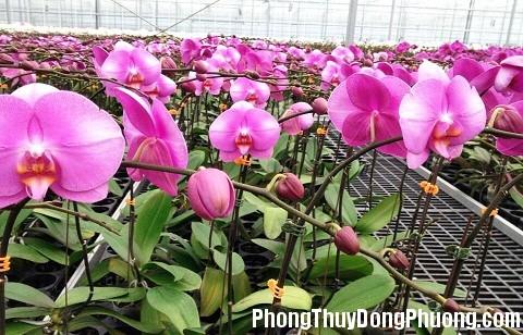 151211 hoa lan ho diep Những loại hoa có tác dụng khai vận cho phòng làm việc
