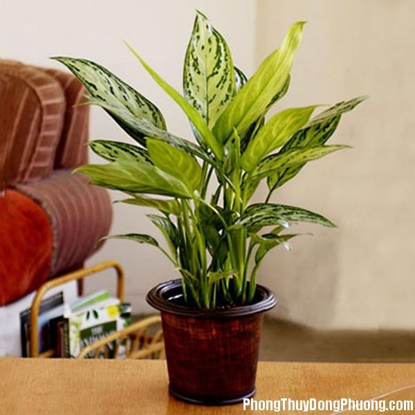 463 Đặt cây gì ở bàn làm việc cho hợp phong thủy nhất?