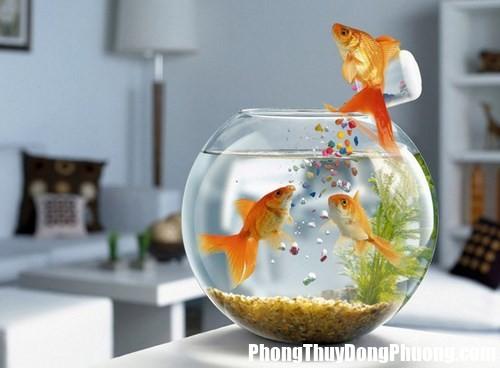 1412178950 03 iqam Những vị trí tuyệt đối nên tránh khi đặt bể cá trong nhà
