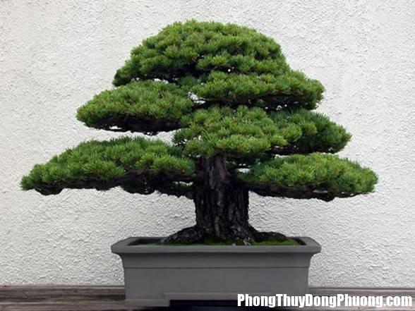 32 3d5d Những loài cây nên và không nên bày ở trong phòng khách
