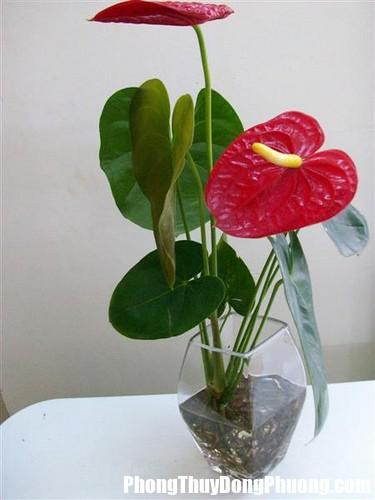hoa hong mon Phòng khách nếu muốn thịnh vượng thì nên trồng những loại cây