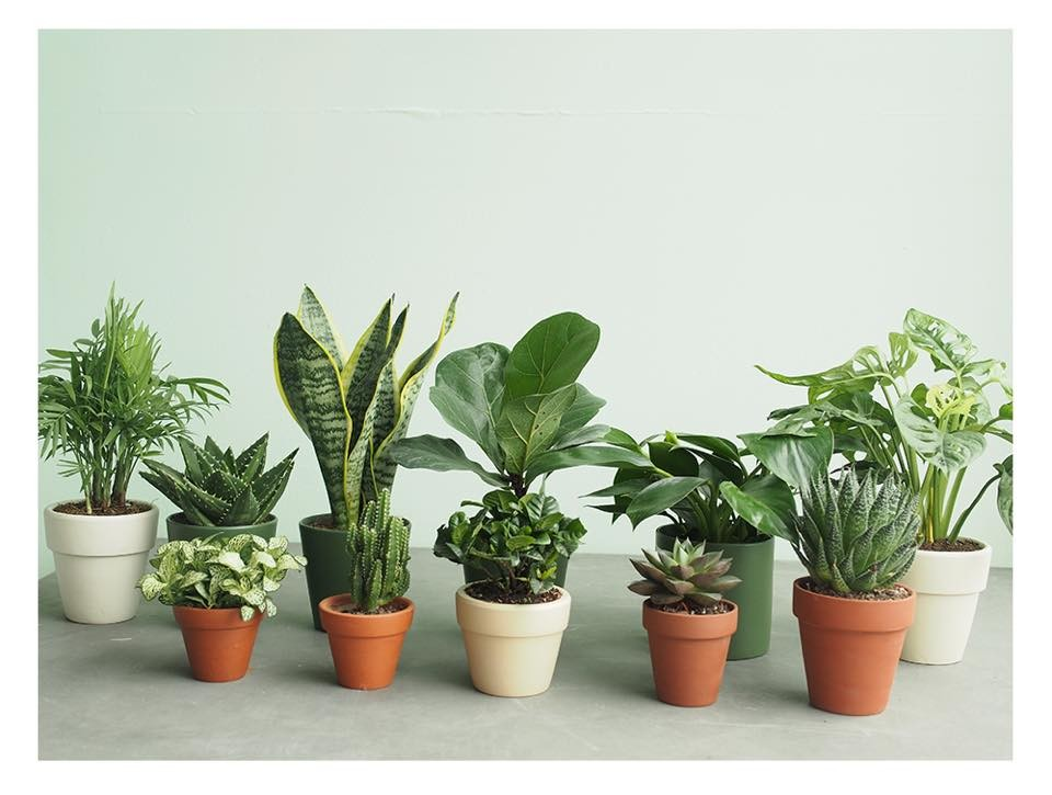 cay canh trong trong nha 1 Cách trồng cây trong nhà để hút tài lộc và may mắn