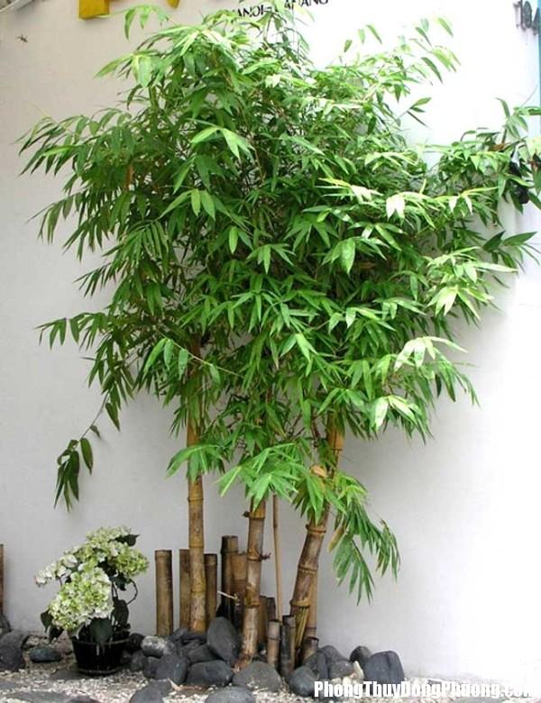 cay tre 1481305061 Bí quyết trồng cây hút lộc dồi dào cho nhà ở